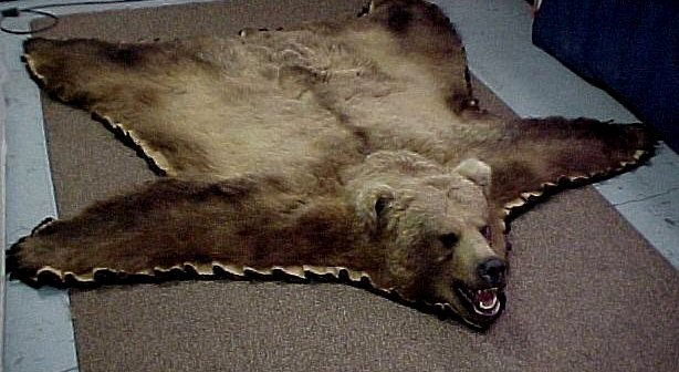 Game Rugs  Alaska Wilderness Arts and Taxidermy